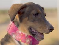 Iris-cachorrita 2 meses mestiza en adopción