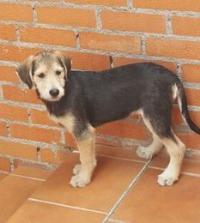 perrito pequeño de un año en adopción