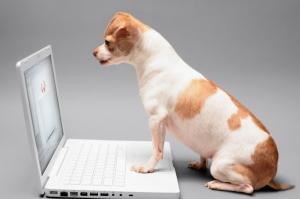 perros en adopción La Estrella Animal SMV
