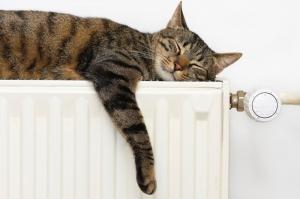 Gatos en adopción La Estrella Animal SMV
