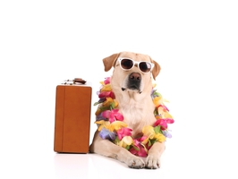 Perros machos en adopción La Estrella Animal SMV