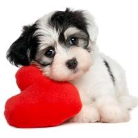 Cachorros en adopción La Estrella Animal SMV
