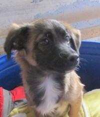 Cachorro tamaño mediano en adopción