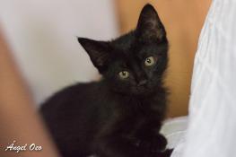 Gatitos en adopción, cachorros en adopción